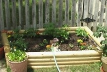 Grow Something / For the garden and gardeners in my life.