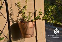 Small Space Gardens/Balconies, Patios, Porches