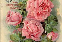 εικόνες με λουλουδια