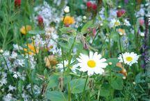 fiori selvatici.