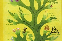 Field guides and natural history