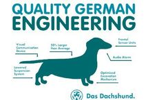 dachshunds / by Caroline Wessinger