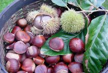 The arrival of colder weather it's time to roast some tasty, nutritious chestnuts in the fireplace. / The arrival of colder weather it's time to roast some tasty, #nutritious #chestnuts in the fireplace. The true flavors of the #Greek #mountainside.