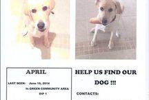 Lost pets in Dubai