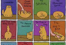 yolo meow