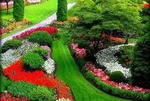 kvetiny zahrada