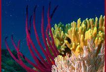 Corales de mar / Pájaros y corales de mar
