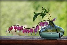 Gardening.. My True Love / by Kayla Musser