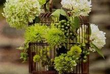 цветы зеленые