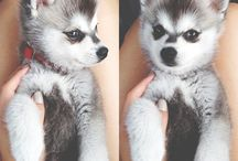 Самые Симпатичные Собаки