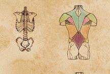 Arte anatomia mano libera