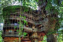 Architecture & Eco building