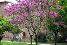 Jardin Sagres arbres