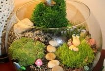 Fairy Gardens / by Ashley Bird