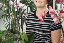 rozmnožování orchidejí