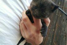 Kotek czarny