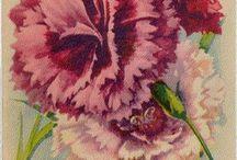Graphics: flower seeds