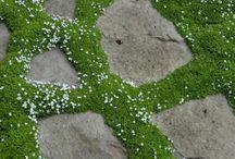 Plantas Tapizantes / Las plantas tapizantes son aquellas especies que recubren el suelo formando una verdadera cubierta o alfombra vegetal. ... Las plantas tapizantes, que tienen la característica de ser resistentes, con baja necesidad de mantenimiento y sin requerir un riego constante, nos permiten disfrutar de espacios verdes.