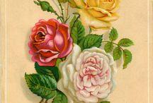 Curarsi con i fiori