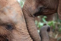 Wonderful Elephants / by Carmen Ritchie