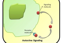 Cell Signaling Pathways