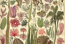 inspiration / sensory delights / by Jacqueline Bligh