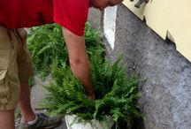 Plants / Patio plants