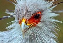 birds / by Erin Crays