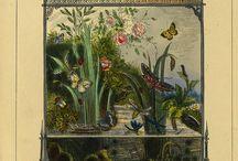 Insects/Terrarium