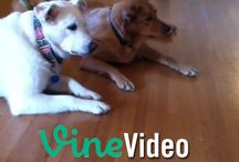 Vine Videos we love! / Some of our favorite #dog and #cat #Vine #Videos!