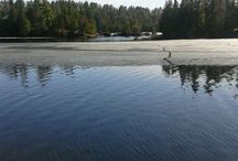 LURES / What should you use if you are planning a trip to Northern Ontario's finest fishing grounds