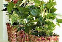 луковая шелуха для ком растений и для огорода
