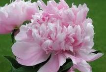Les Fleurs / by baltimore prep (ashley c)