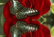 Butterflies & Moths & Some times dragonflies