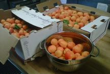 What's cookin' / Seasonal fruit at the height of flavor, ready to be made into the best jams and marmalades