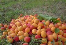 Ягоды, фрукты и т.д.