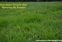 Pasture Management / Keeping horses and looking after your pasture is very important especially if your grazing is limited.