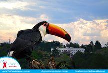 Animales / Algunas de las aves y otros animales de los alrededores del CAVS de Misiones.
