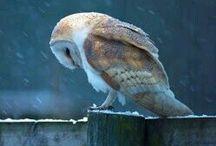 ••• OWLS ••• / Quand le hibou chante, la nuit est silence.