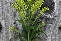 Flower Name