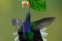 HUMMINGBIRDS <3
