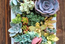 Ideas de jardinería