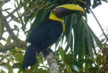 Animals in Latin America
