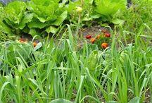 plantes amies au jardin