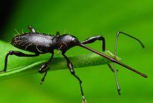 Жучки,жуки и жучищи / by Александр Овчинников