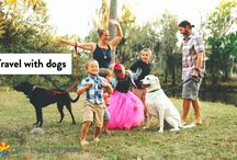Traveling with dogs – how this family of four does it in an RV