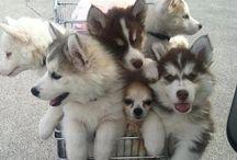 Sweet Animales