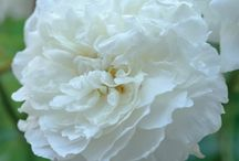 Garden {flowers} / by Sweet Pea & Roses