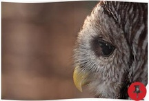 Owl Images / Images of Owls / by Dan Moore