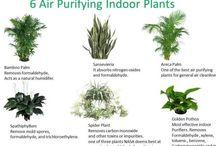 Best indoor plants air purifiers
